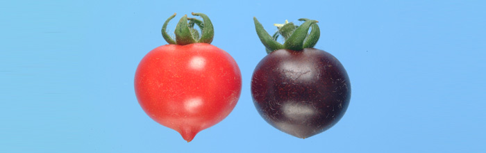 Financial Times article on Cathie Martin's work, including purple tomatoes